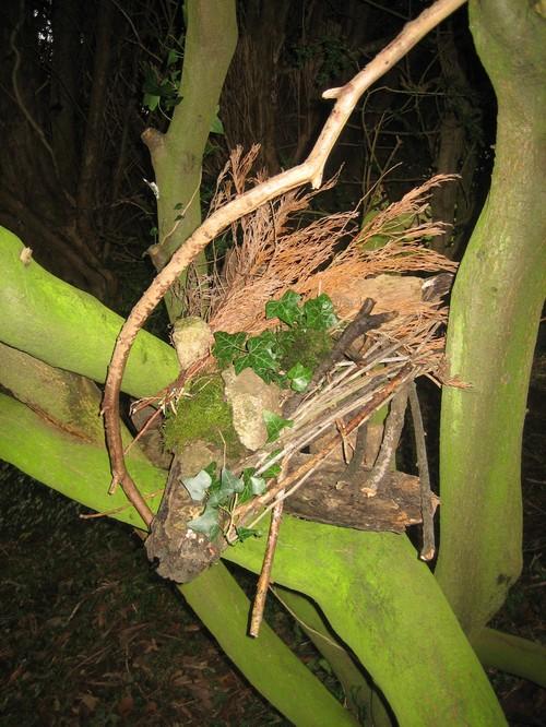 Nest_within_rising_sap