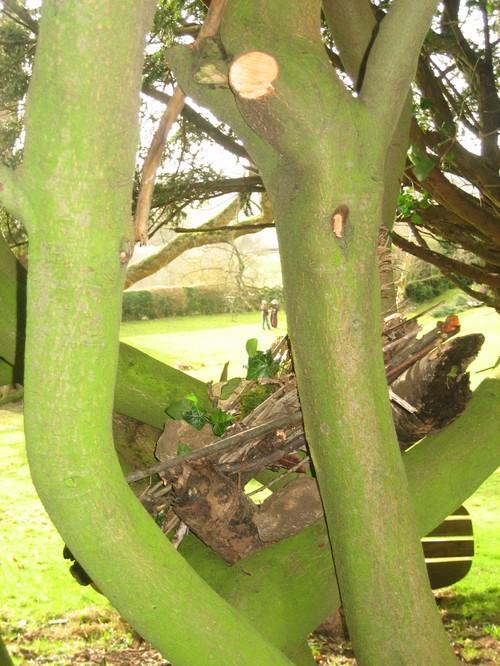 Nesting_at_hawkwood